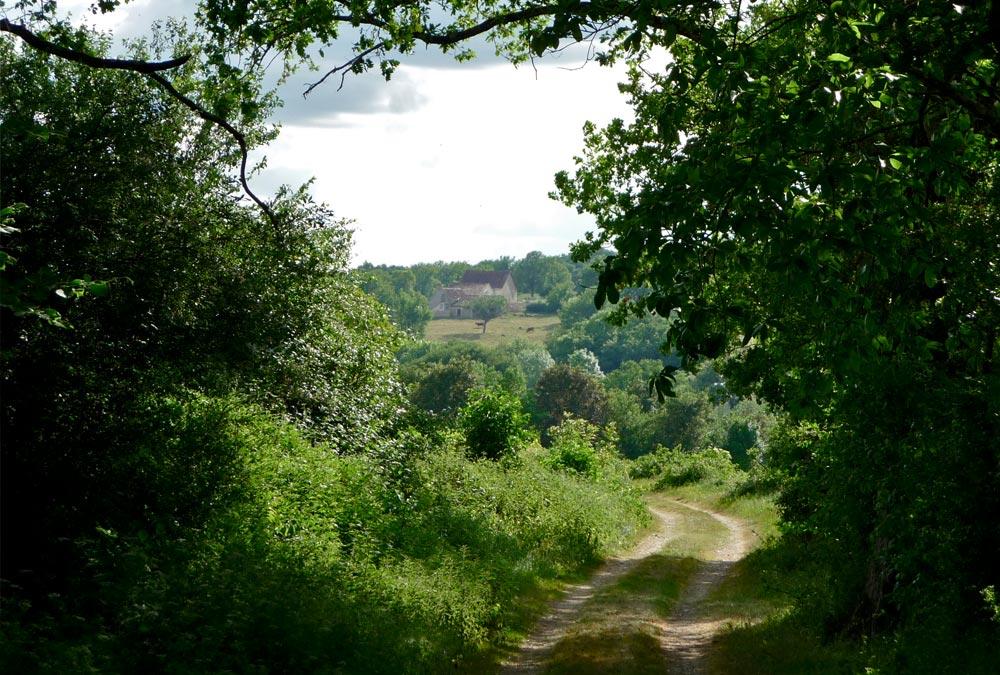 Chemin entre Antigny et Jouhet